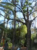 アフリカ モロッコ 6泊8日(マラケシュ)