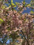☆春のプラハでモルダウを~♪.:*ハンガリー・スロバキア・チェコ周遊10日間 vol.33 チェスキークルムロフ城('▽'*)