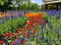 6月の真夏日、水不足と思われる大阪万博記念公園「あじさいの森」周辺をホロホロ散歩。(2019)