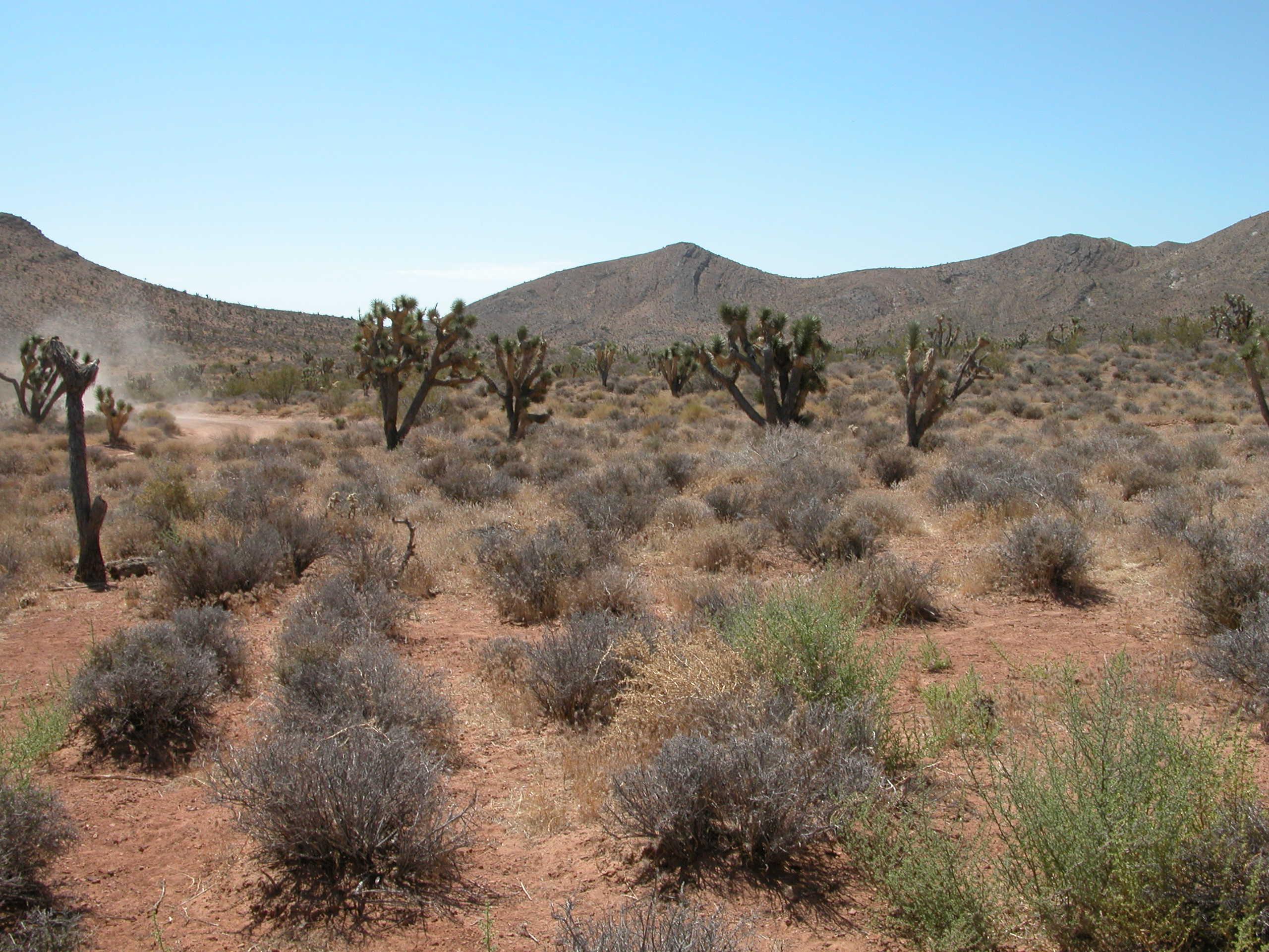 モハベ砂漠の画像