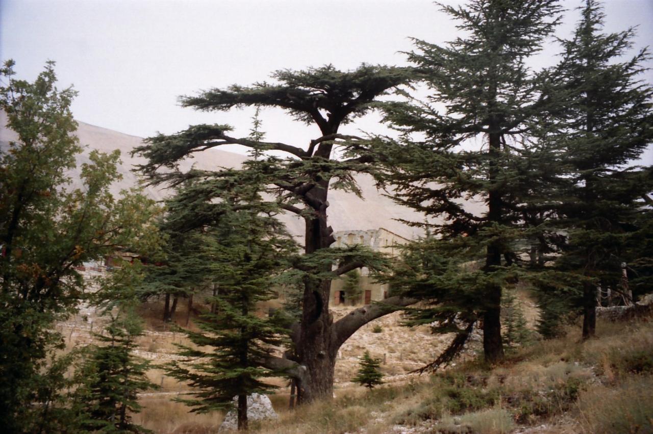 レバノン・・・レバノン杉を訪れる』その他の都市(レバノン)の