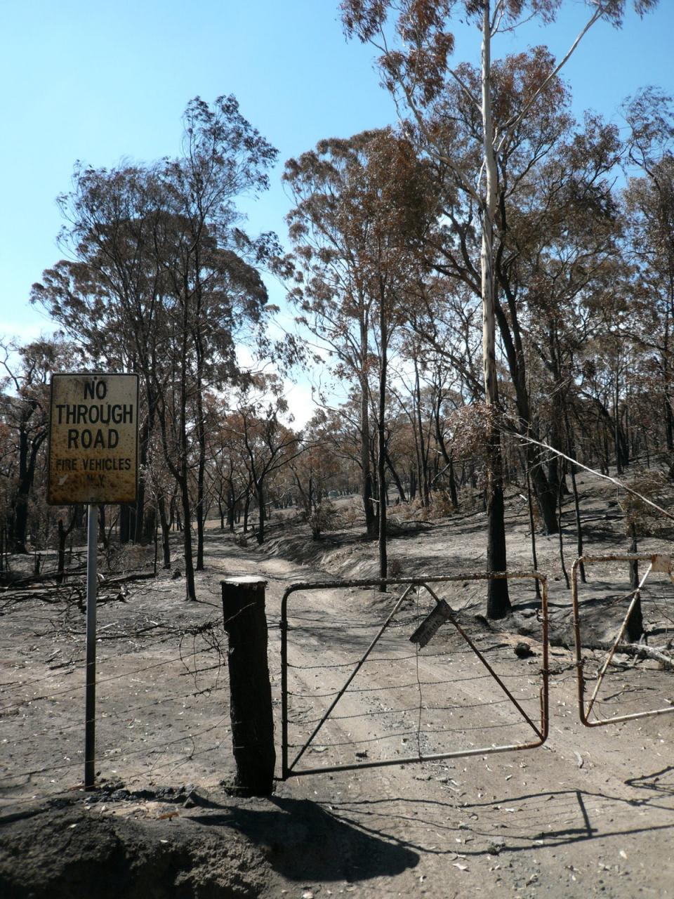 鎮火 オーストラリア 山 火事