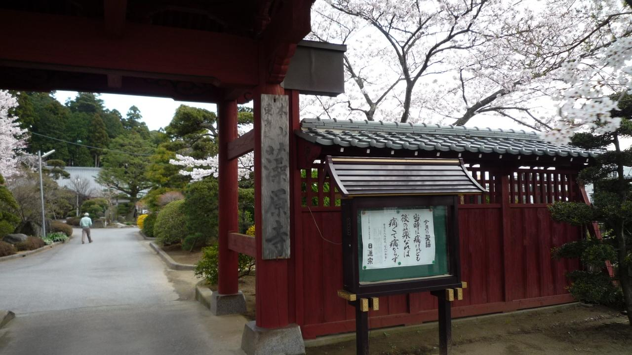 10年04月04日(日)、茂原市・藻原寺(そうげんじ)の桜。