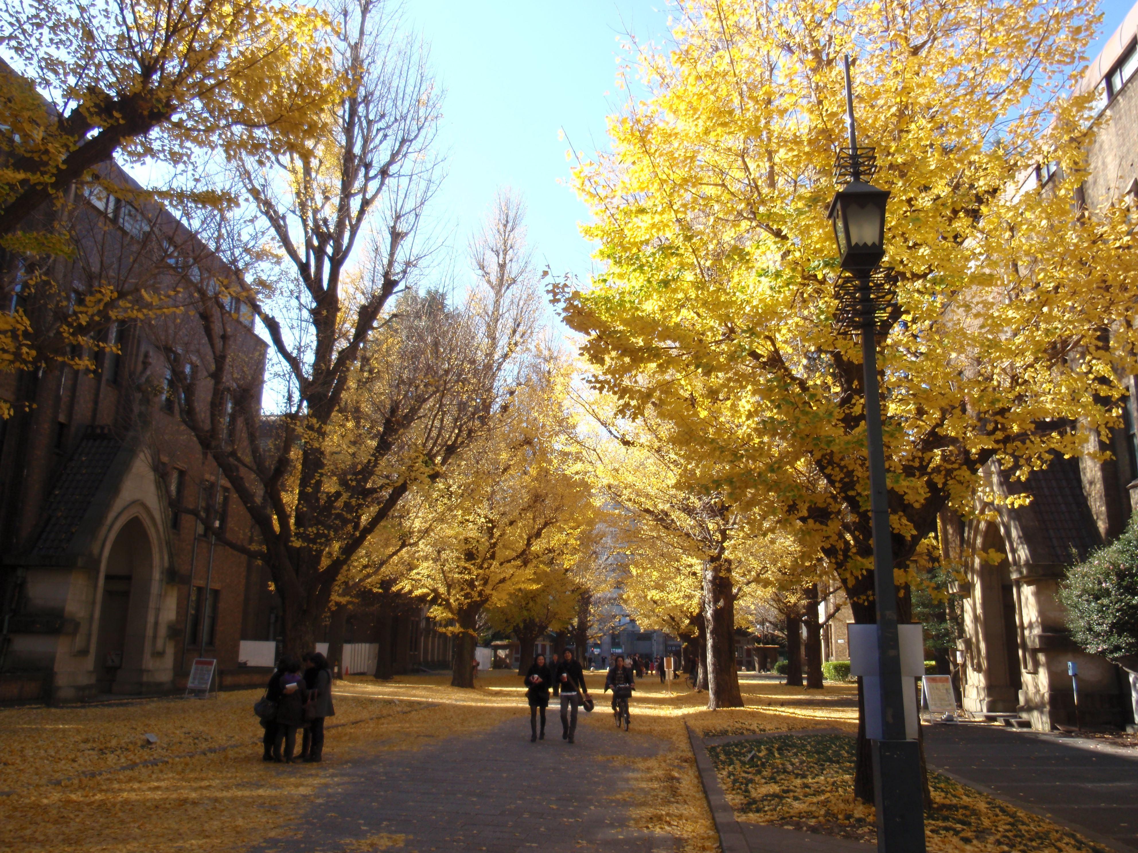東京大学でハチ公に再会!全米が涙した愛情物語の …