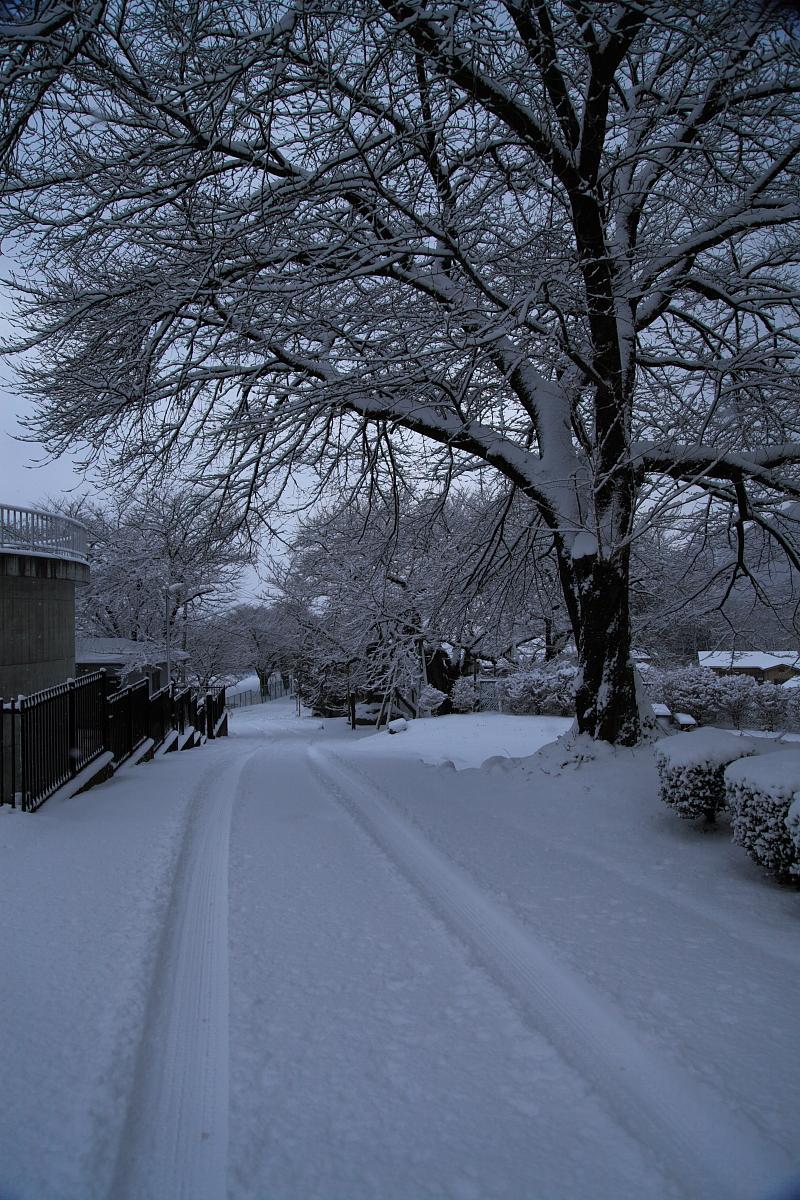 2012・1 雪の仁科三湖・サルへ会いに行こう