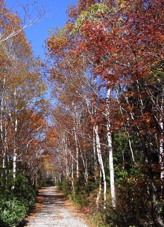 エメラルドグリーンのきれいな湖: 『紅葉満喫♪志賀高原 エメラルドグリーンの大沼池ハイキング