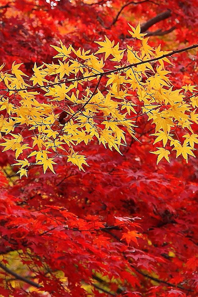 気ままな旅の物語⑧-秋の京都へ紅葉散策2012 さすが京都屈指の紅葉名所 常寂光寺 編ー