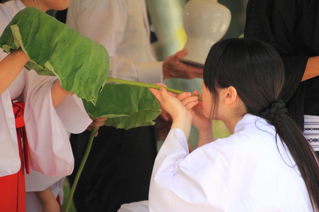 京都を歩く(173) 真夏の嵐山・嵯峨野へ 「名古曾の蓮」が咲く大覚寺大沢池の観蓮節