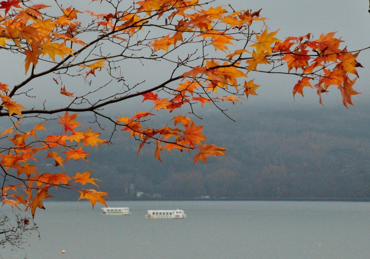 2014年紅葉シリーズ(9)  宴の後の山中湖畔の紅葉と、宴たけなわの河口湖もみじ回廊