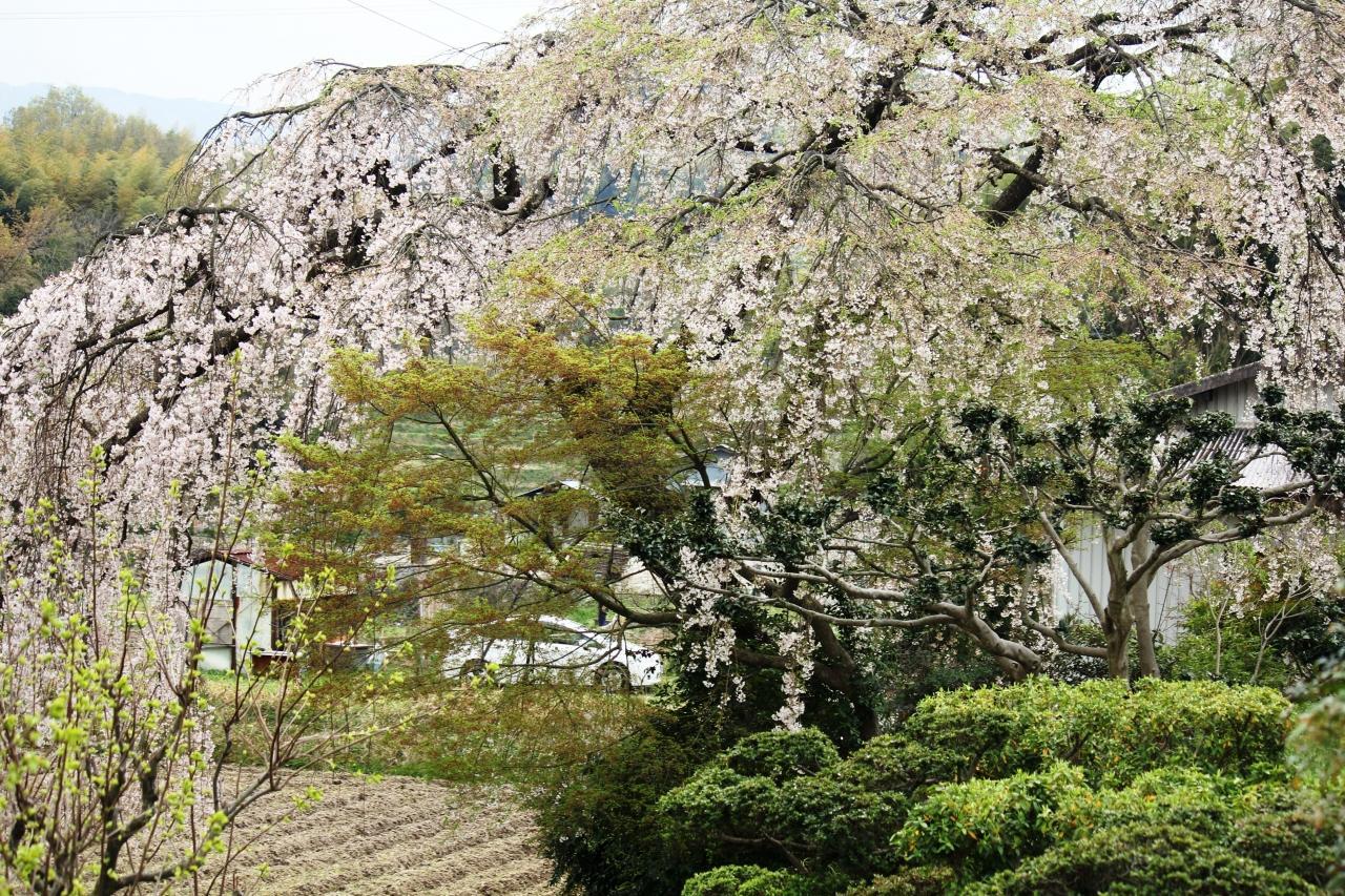 『'15.春を求めて(和泉リサイクル環境公園・岸和田慈光園 ...