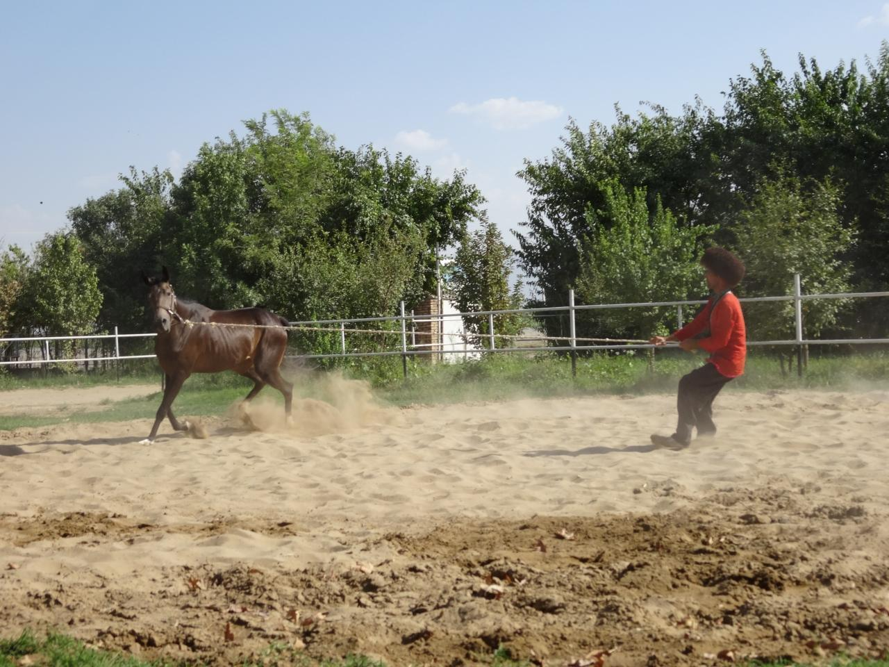 アハルテケ種の厩舎
