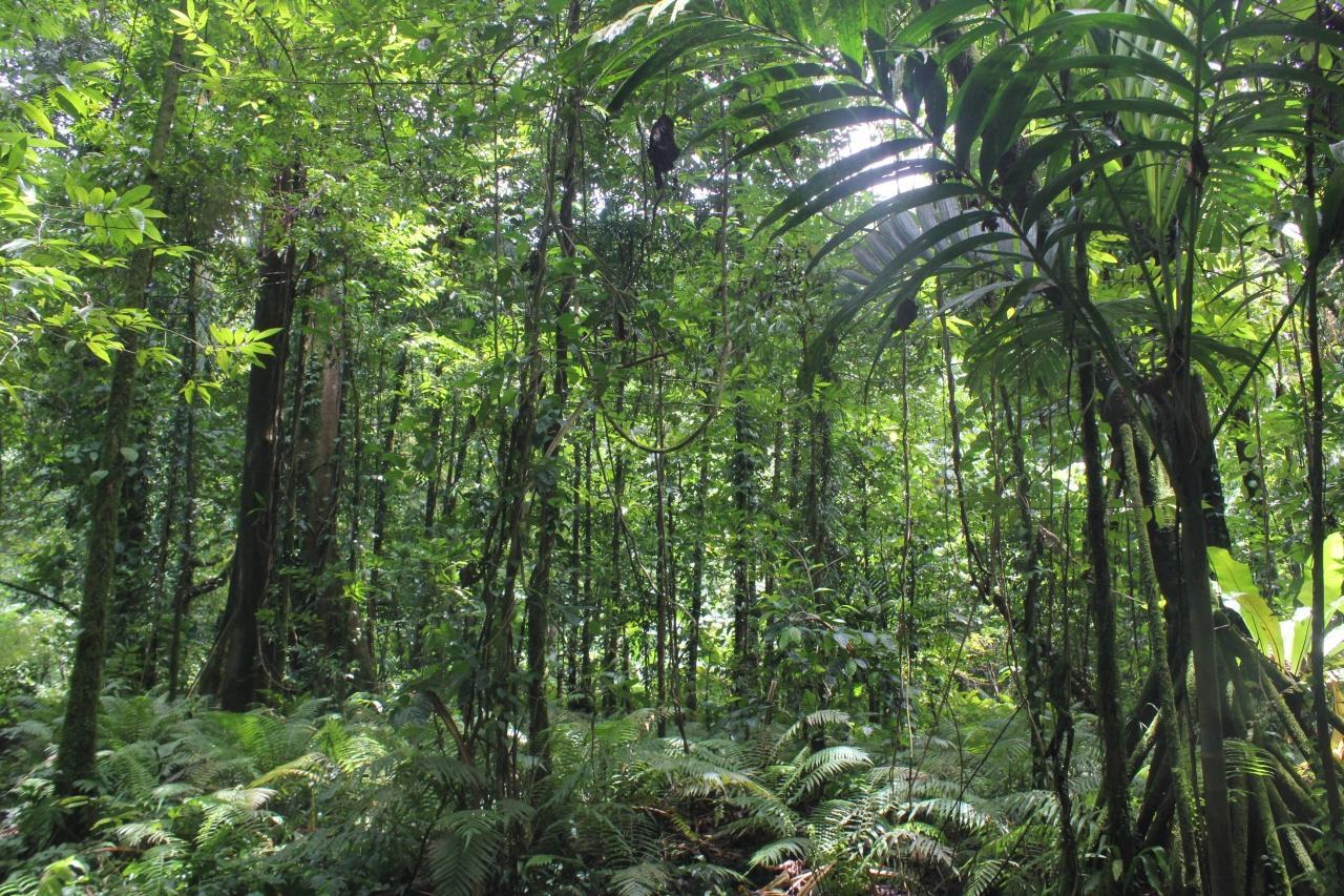 『コスラエ島でジャングルとマングローブ林へ』コスラエ島