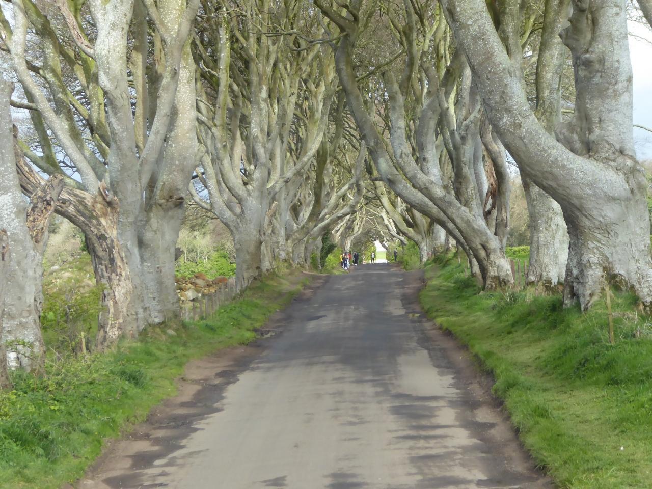 立派な樹木が沢山の画像
