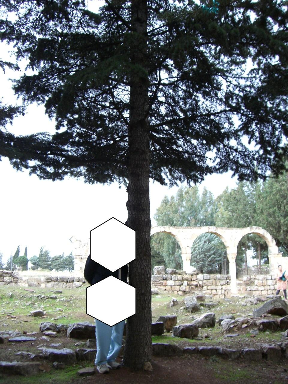 中東3カ国(レバノン、シリア、ヨルダン)遺跡と旧約聖書ゆかり