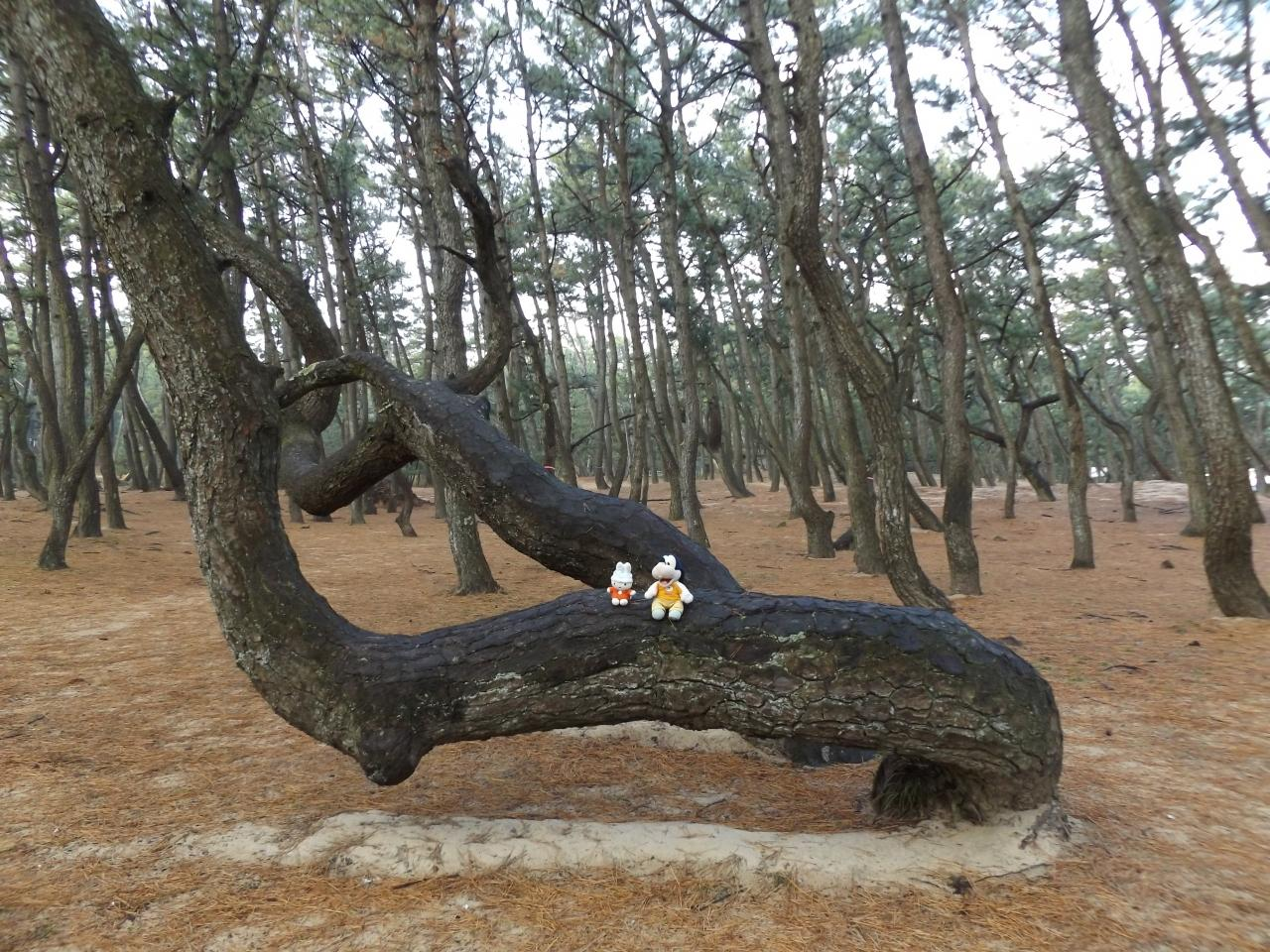 首吊り 樹海