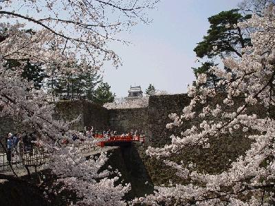 会津若松の鶴ヶ城の桜