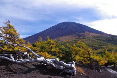 富士山を望む紅葉ビューポイント奥庭自然公園