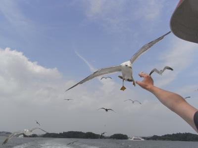 観光船の楽しみは・・・(松島島巡り観光船)