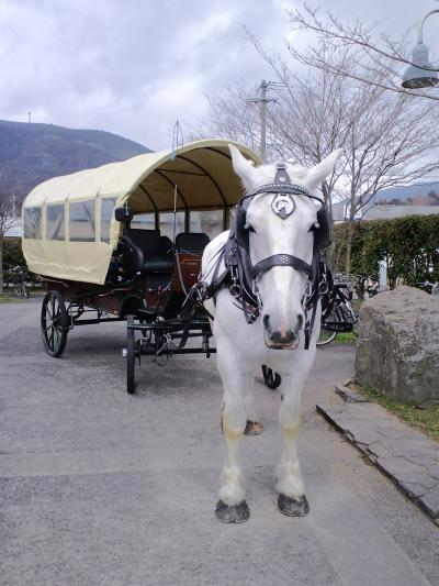 白馬と写真が撮れます