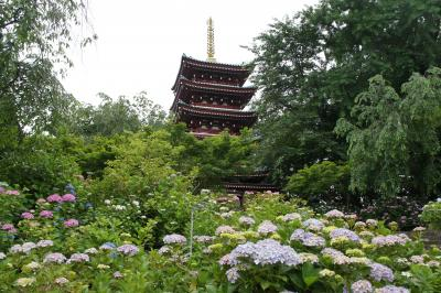 本土寺(あじさい寺)