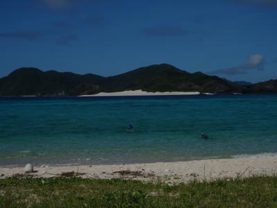 ウミガメさんと泳ぐ Swimming with sea turtles