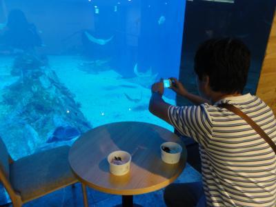 済州島にできたばかりの新しいアジア一大きい水族館