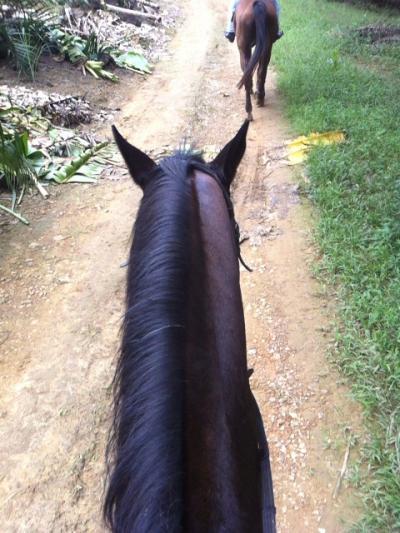 乗馬のみの利用