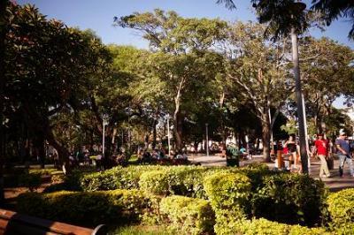 木々や花が美しい広場です