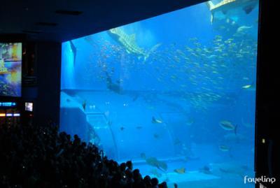 沖縄で水族館なら