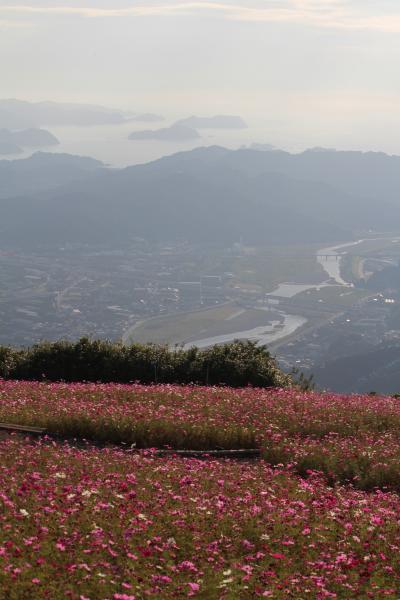 絶景の鷲ヶ峰コスモスパーク