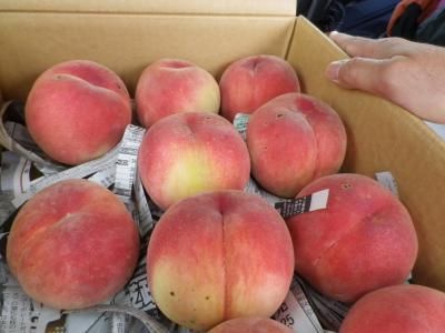 新府共選場。美味しい桃が驚きの安さで手に入ります♪