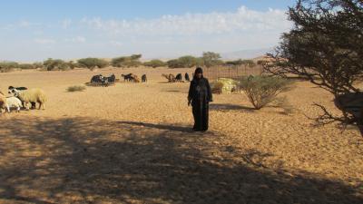 ワディ・アラバ砂漠のベドウィンファミリー訪問