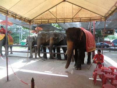 ゾウに乗る!