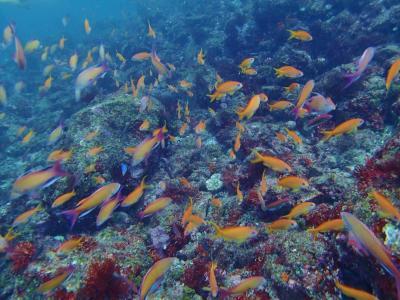 熱海港からフェリーで30分、透明度の良いダイビングスポット