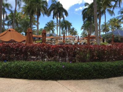 中庭の風景。