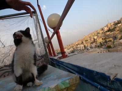 屋上の猫。超ひとなつっこい!