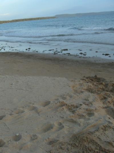 砂浜☆4個。
