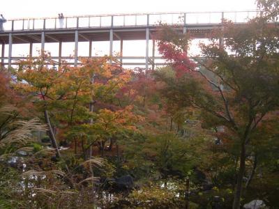 水景園の紅葉はいまが見頃です!