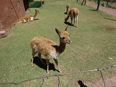 野生動物の保護センター! コンドルや山猫が見れました♪