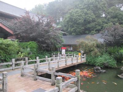 レストラン前の橋にはたくさんの鯉が集まっています
