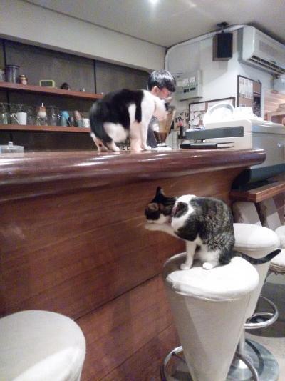 違う猫カフェに行ってみたくなりました。