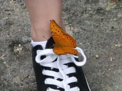 蝶の乱舞、キモ~イ!と言う女性が多いかも