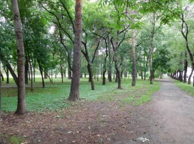 まるで林の中を散策しているような並木通り