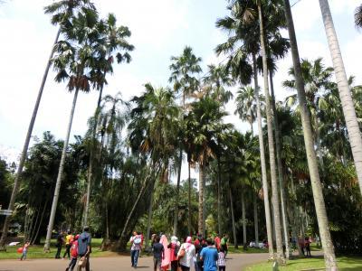 ジャカルタから日帰りで行ける広大な植物園