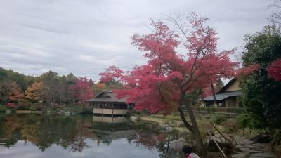 紅葉が素晴らしい!