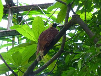 珍しい極楽鳥を見る事ができる!