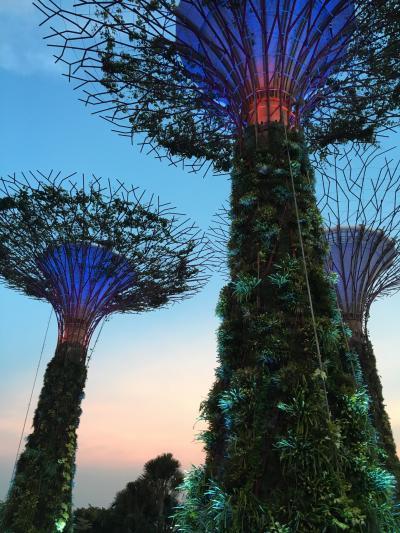 幻想的な庭園♪ライトアップが素晴らしい