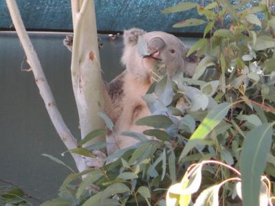 オーストラリアの固有種を効率的に見られる動物園