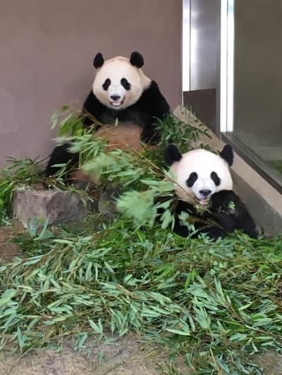 ジャイアントパンダの親子もいます