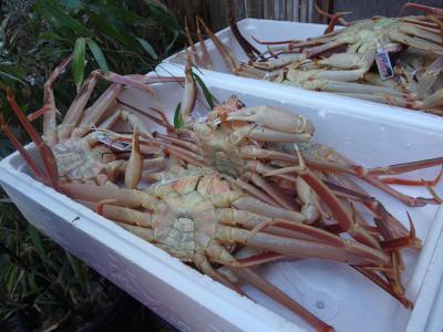 活け松葉蟹のボリュームとお味に大満足